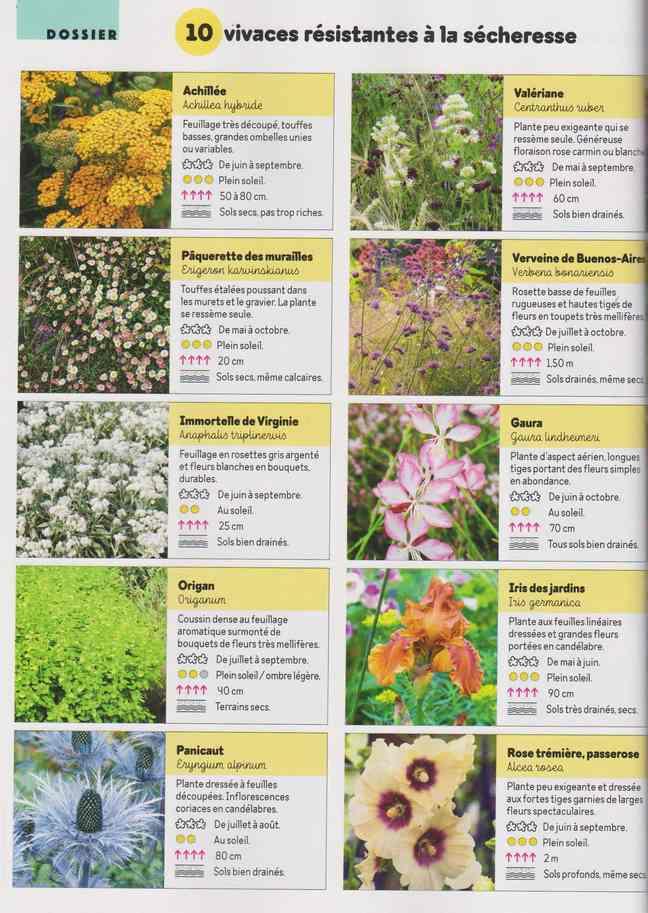au jardin - Page 17 4i10