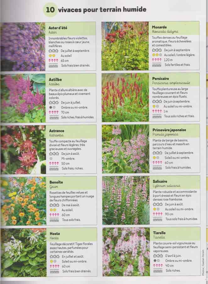 au jardin - Page 17 4j10