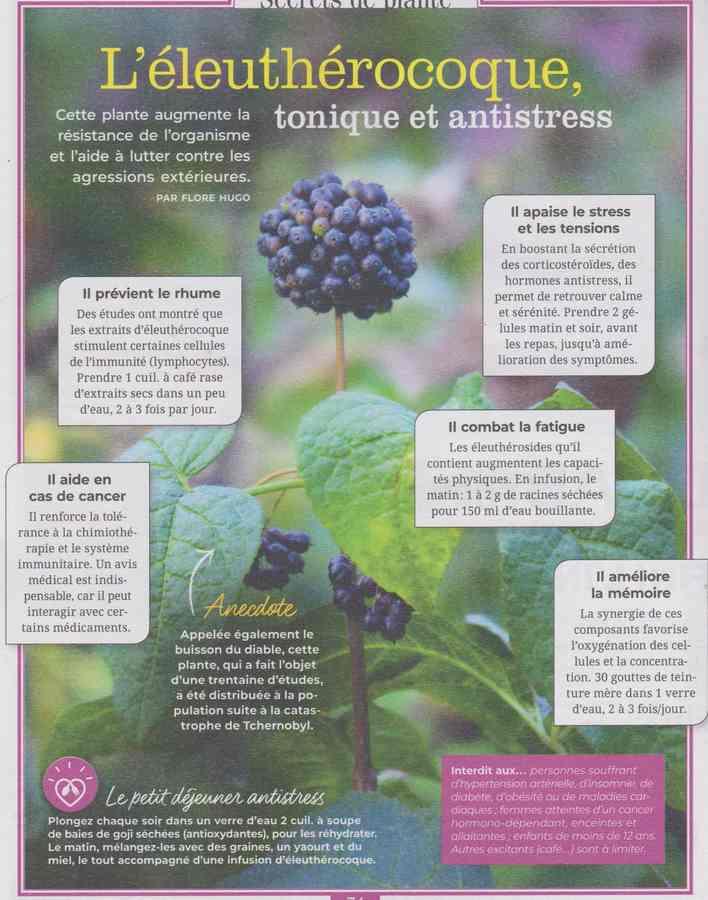 les plantes qui soignent - Page 11 510