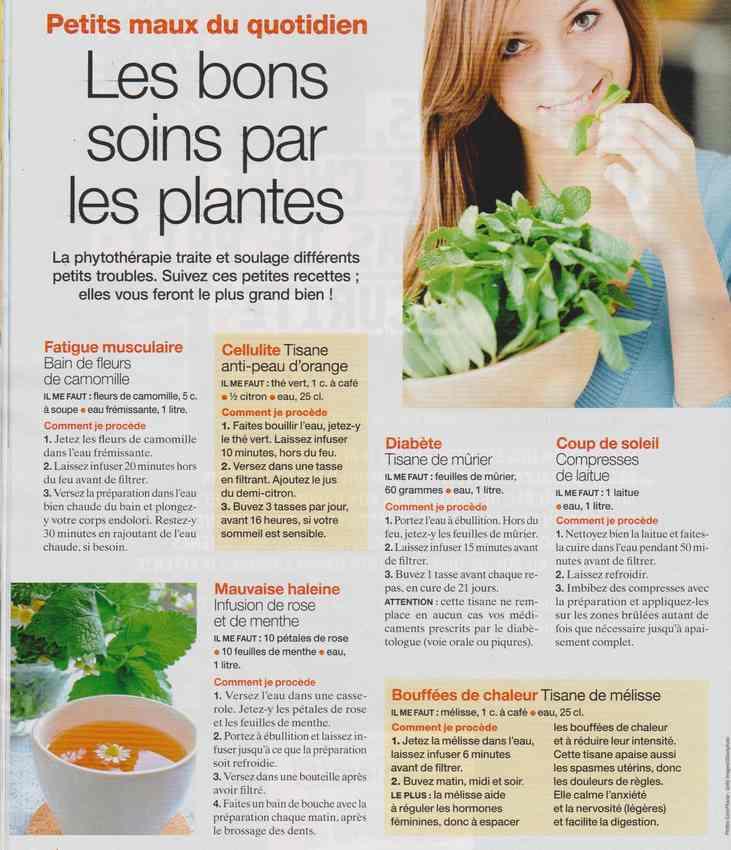 les plantes qui soignent - Page 12 513
