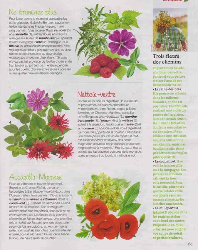 les plantes qui soignent - Page 12 516