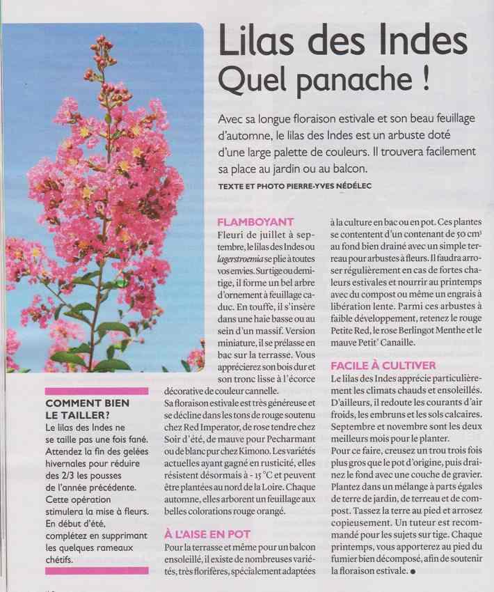 au jardin - Page 40 518