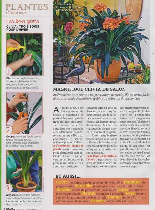 clivia - Page 3 528