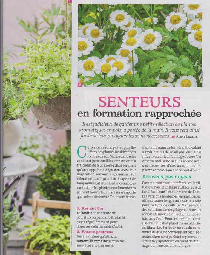 au jardin - Page 24 540