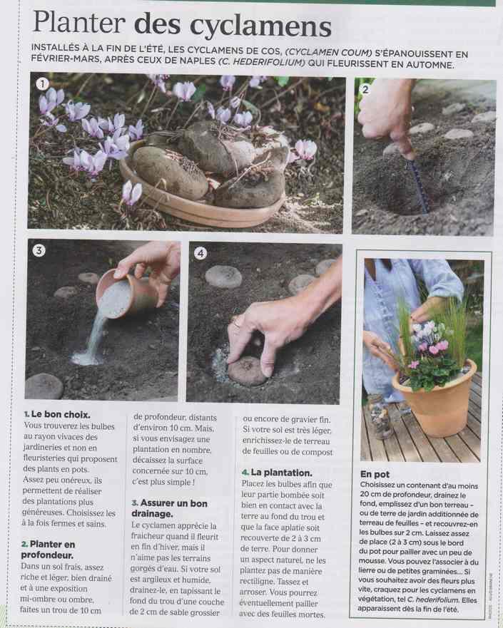 au jardin - Page 26 543