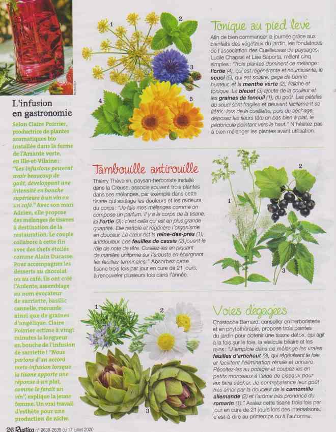 les plantes qui soignent - Page 12 5a13