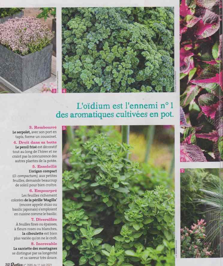 au jardin - Page 24 5a27