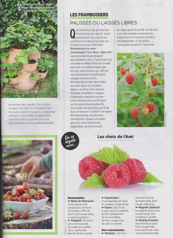 au jardin - Page 42 5b12