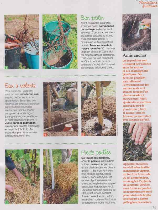 au jardin - Page 5 5b14