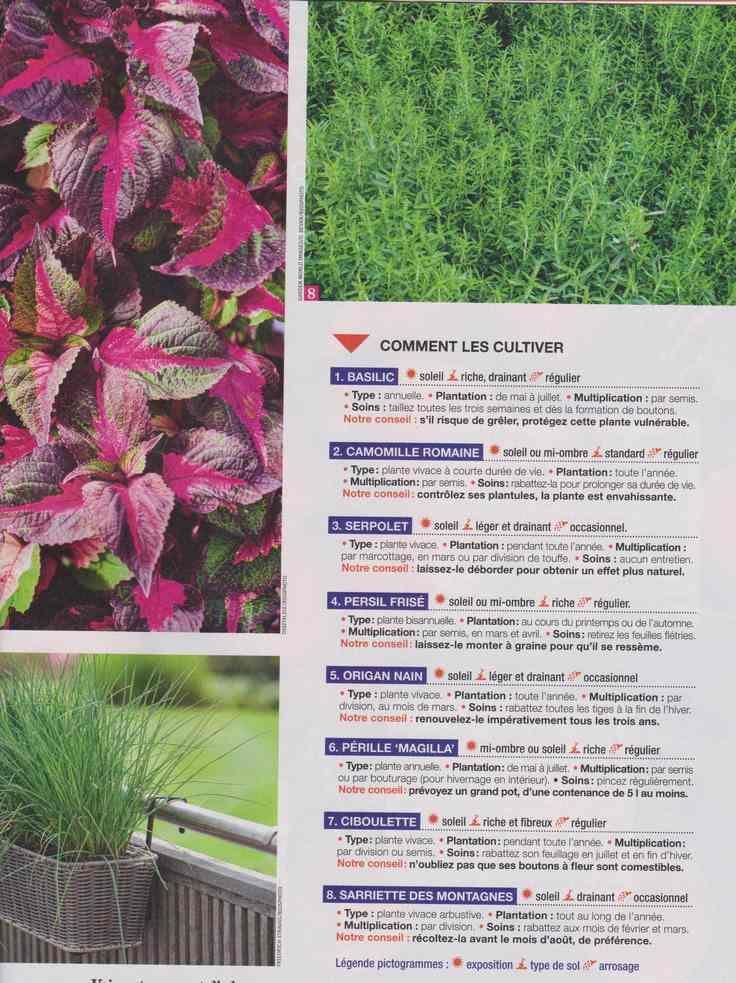 au jardin - Page 24 5b20