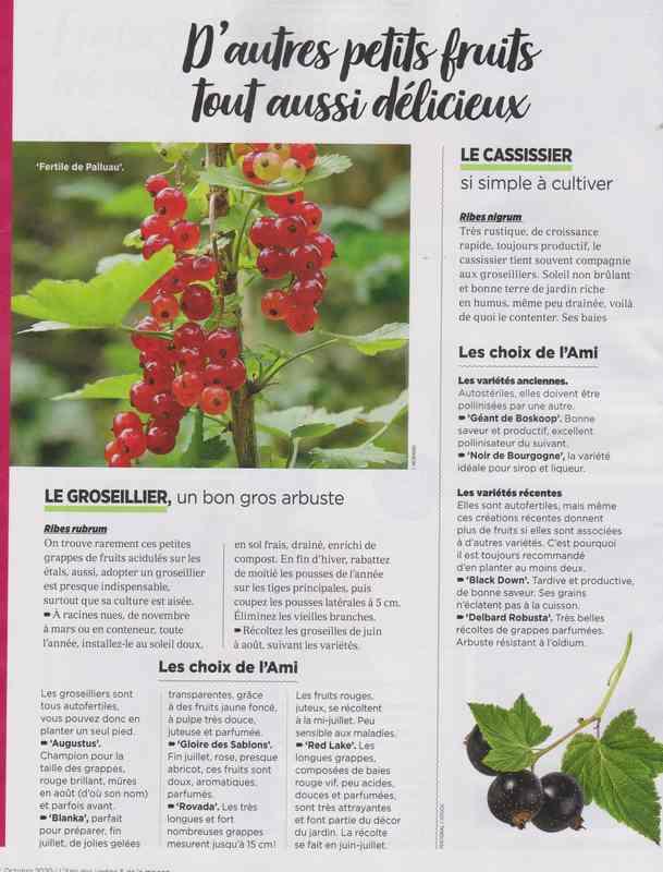 au jardin - Page 42 5c11