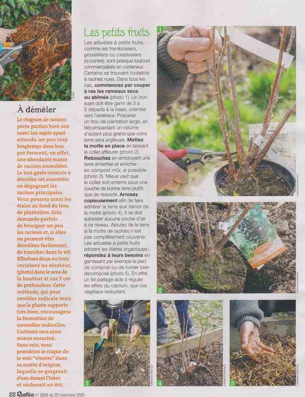 au jardin - Page 5 5c12