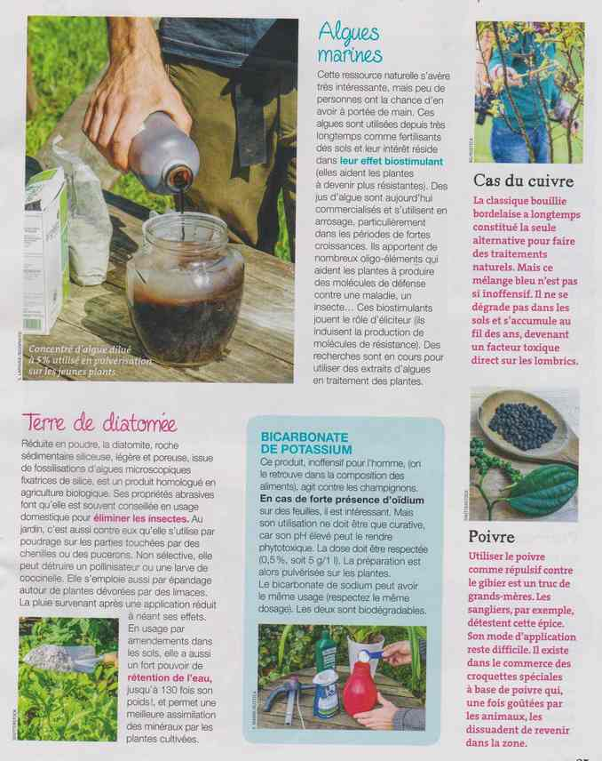 au jardin - Page 8 5c13