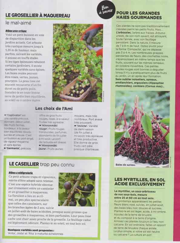 au jardin - Page 42 5d11