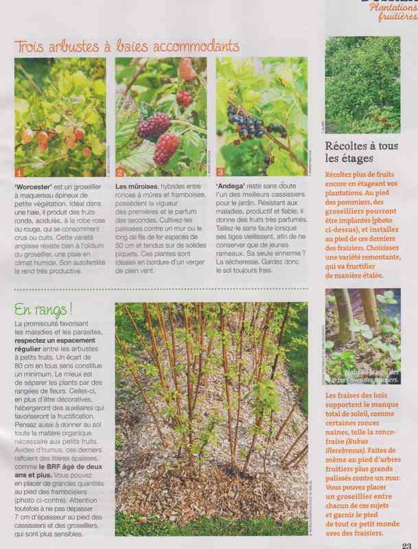 au jardin - Page 5 5d12