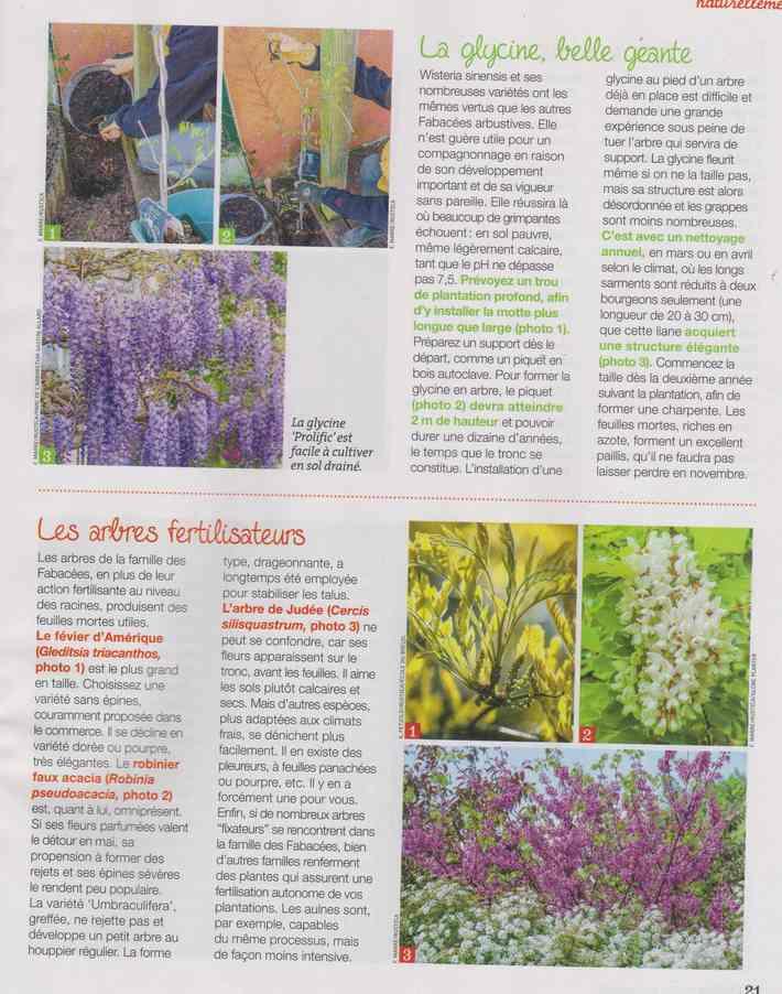 au jardin - Page 18 5d16