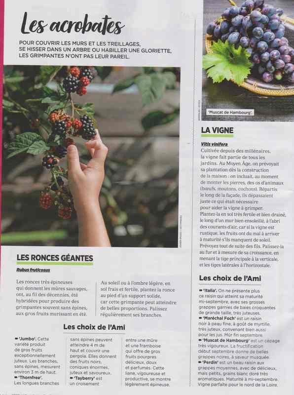 au jardin - Page 42 5e10