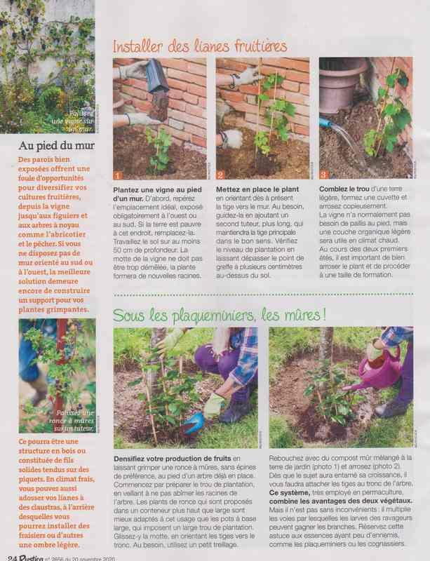au jardin - Page 5 5e11