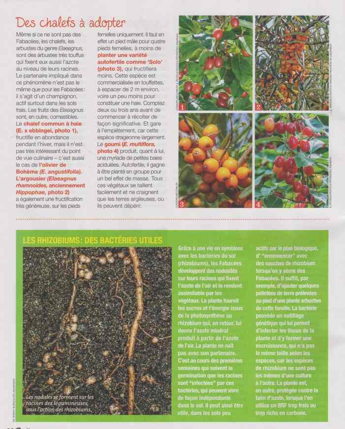 au jardin - Page 18 5e14