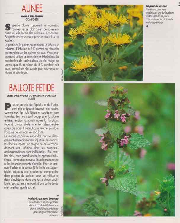 les plantes qui soignent - Page 14 5h10