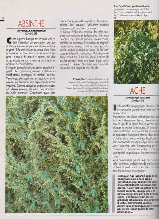 les plantes qui soignent - Page 14 627