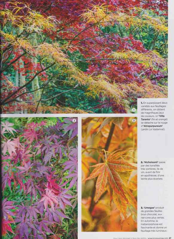 au jardin - Page 2 6a14