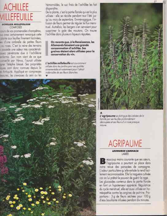 les plantes qui soignent - Page 14 6a19