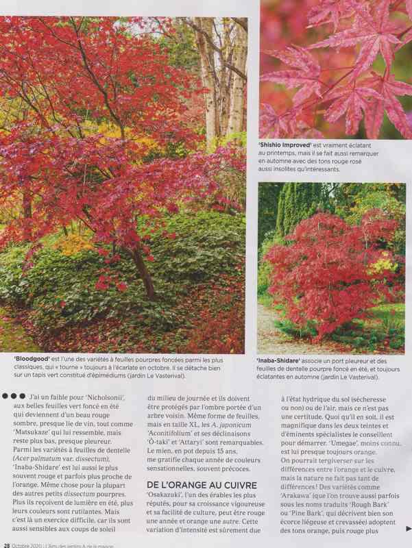 au jardin - Page 2 6b12