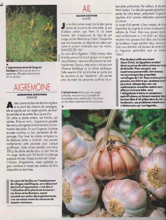 les plantes qui soignent - Page 14 6b14
