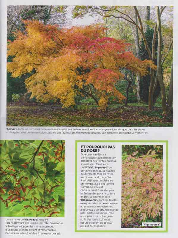 au jardin - Page 2 6c11