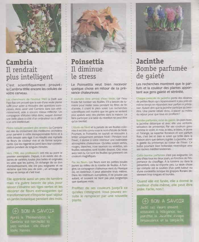 les maladies au jardin - Page 4 6c12
