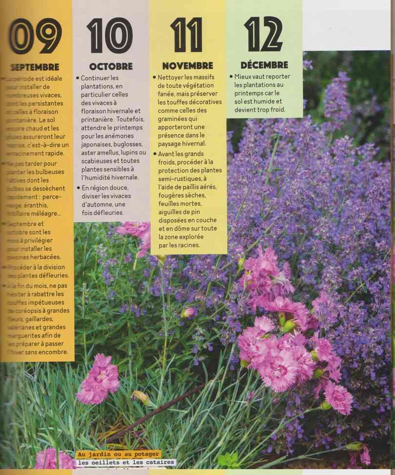 au jardin - Page 16 6c15