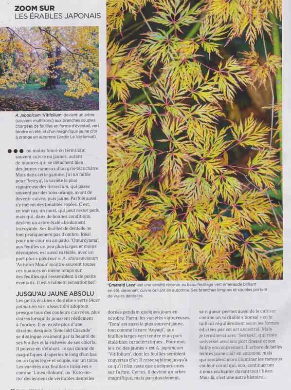 au jardin - Page 2 6d11