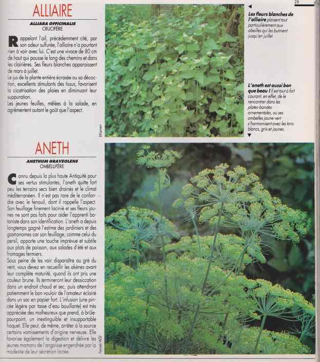 les plantes qui soignent - Page 14 6d12