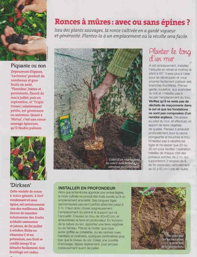 au jardin - Page 12 6d13