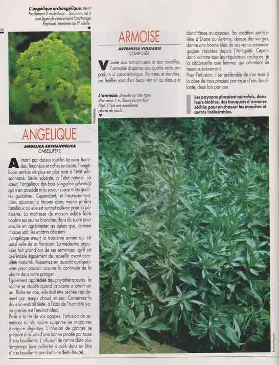 les plantes qui soignent - Page 14 6e11
