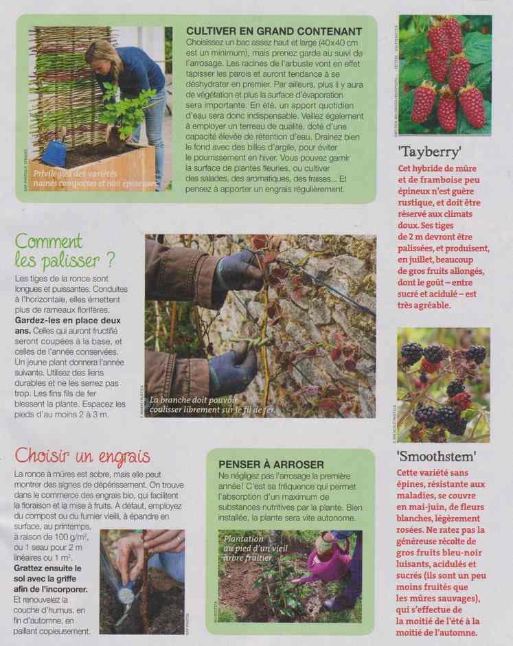 au jardin - Page 12 6e12