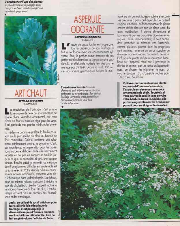 les plantes qui soignent - Page 14 6f12