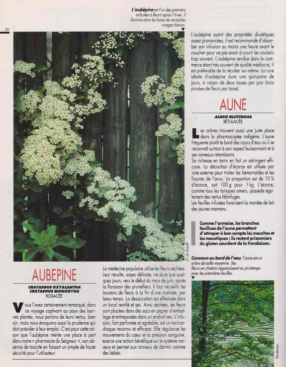 les plantes qui soignent - Page 14 6g11
