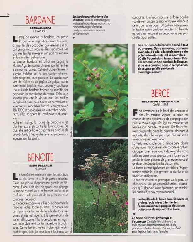 les plantes qui soignent - Page 15 6h11