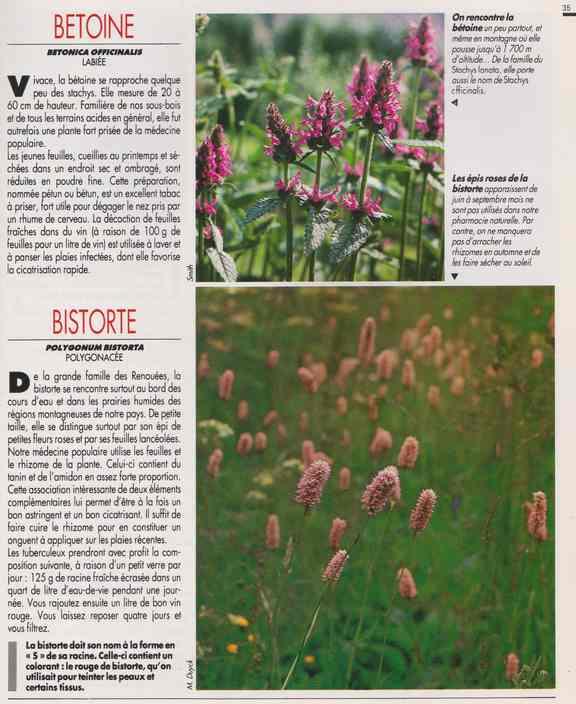 les plantes qui soignent - Page 15 6i10