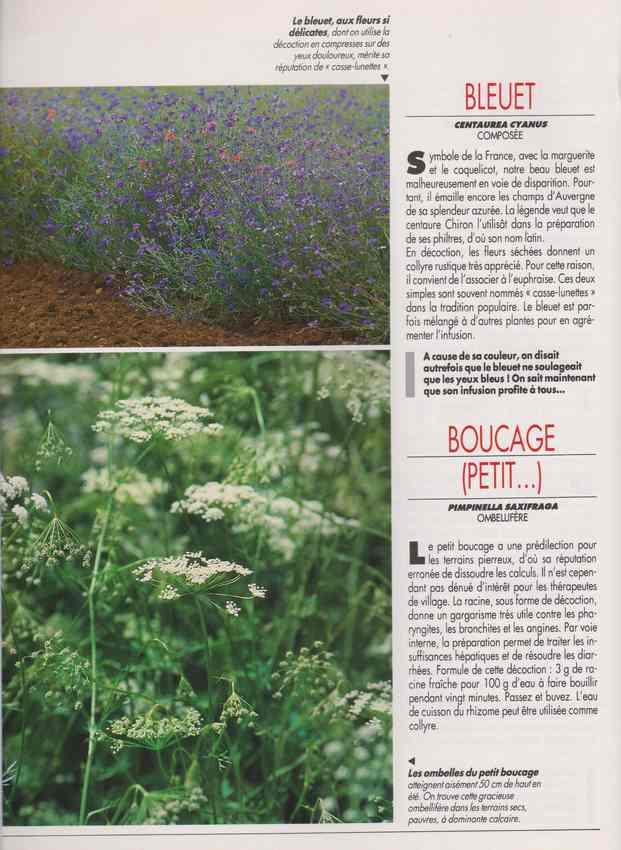 les plantes qui soignent - Page 15 6j11