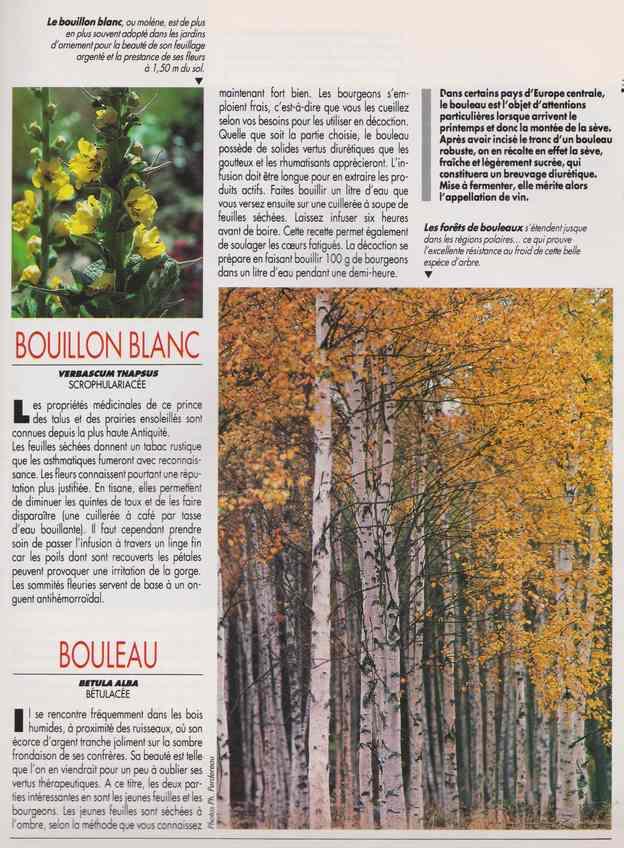 les plantes qui soignent - Page 15 6k10