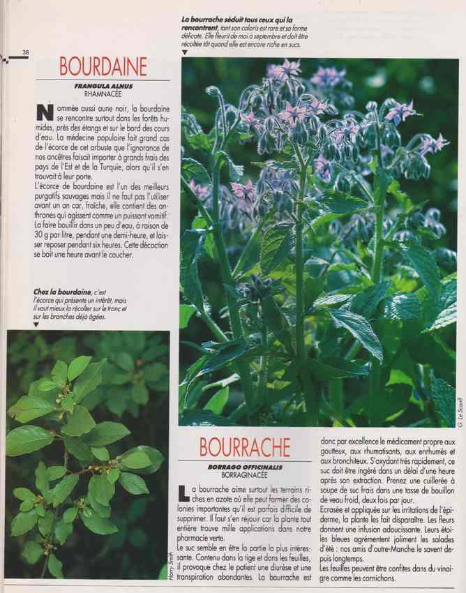 les plantes qui soignent - Page 15 6l10