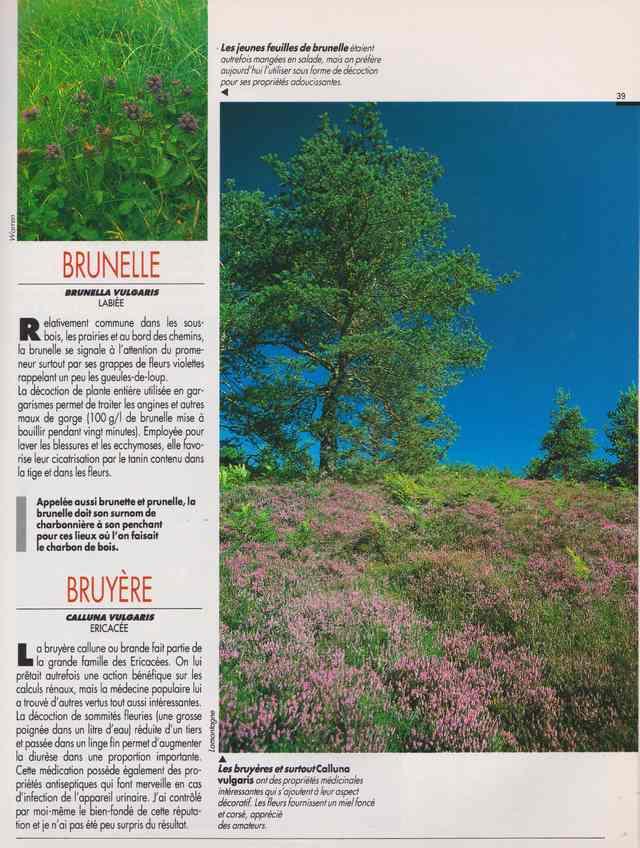 les plantes qui soignent - Page 15 6m10
