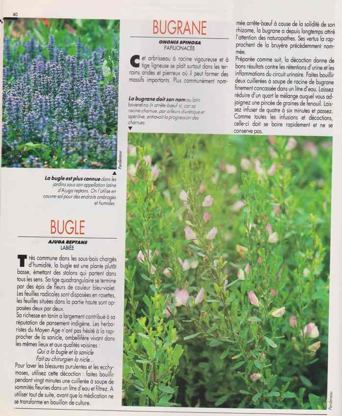 les plantes qui soignent - Page 15 6n10