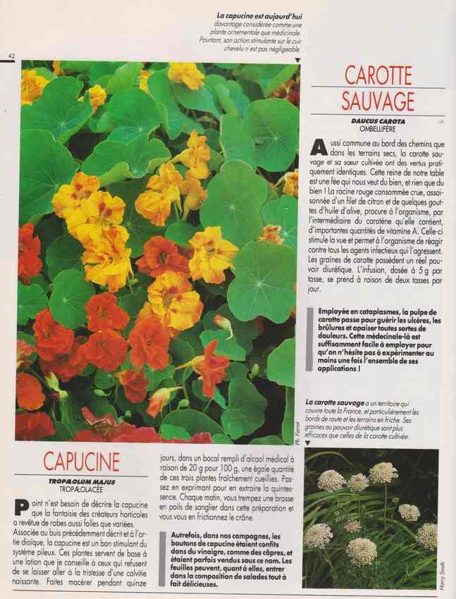 les plantes qui soignent - Page 15 6p10