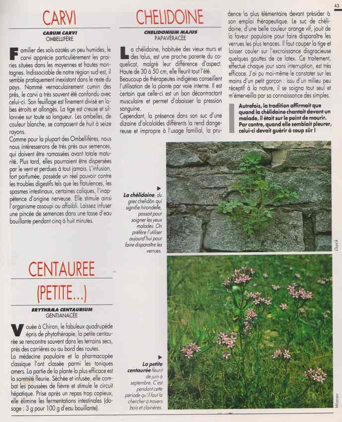 les plantes qui soignent - Page 15 6q10