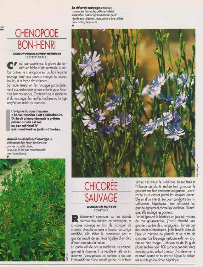 les plantes qui soignent - Page 15 6r10