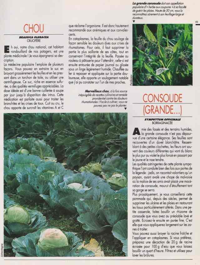 les plantes qui soignent - Page 15 6s10